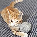 Ginger Cat With Yarn Ball by Sophie McAulay