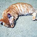 Ginger Sleeps by Eric Forster