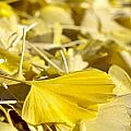 Gingko Leaf by Carol Erikson