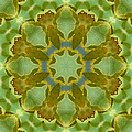 Ginkgo Leaf Kaleidoscope Mandala by MM Anderson