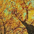 Ginkgo Tree  by Chris Berry
