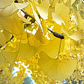 Ginko Tree by Roleen  Senic
