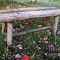 Ginny's Bench by Kerri Mortenson