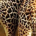 Giraffe Butts 2 by Micah May