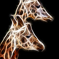 Giraffe Duo Fractal by Pati Photography