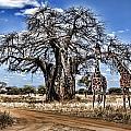 Giraffe Duo by Wendy White