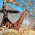 Giraffe by Gerald Greenwood