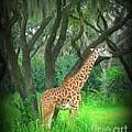 Giraffe In Florida by John Malone