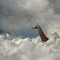 Giraffe In The Cloud by John Lund