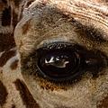 Giraffe Look Into My Eye by Thomas Woolworth