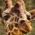 Giraffe Photo Art 01 by Thomas Woolworth