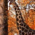 Giraffe Photo Art 03 by Thomas Woolworth