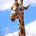 Giraffe Speak by Marilyn Hunt