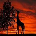 Giraffe Sunset Silhouette Series by David Dehner
