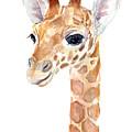 Giraffe Watercolor by Olga Shvartsur