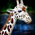 Giraffe Zoo Art by Steve McKinzie
