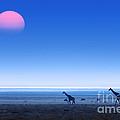 Giraffes On Salt Pans Of Etosha by Johan Swanepoel