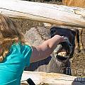 Girl Pets Donkey by Tara Lynn