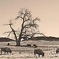 Give Me A Home Where The Buffalo Roam Sepia by James BO Insogna
