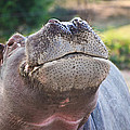Give Me A Kiss Hippo by Eti Reid