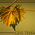 Give Thanks by Carolyn Marshall