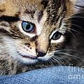 Gizmo Feeling Blue by Terri Waters