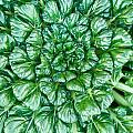 Glabrous Leaves by Douglas Barnett
