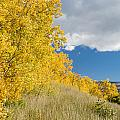Glacier Fall Color Ridge by Greg Nyquist