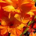 Gladiola Coral by Saundra Myles