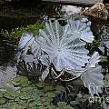 Glass Flowers by Hilton Barlow