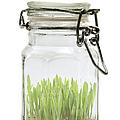 Glass Jar by Fabrizio Troiani