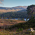 Glen Affric Panorama II by Gary Eason