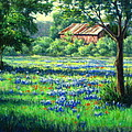 Glen Rose Bluebonnets by Vickie Fears