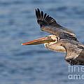 gliding by Pelican by Bryan Keil
