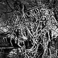 Gloomy Icy Tree by Brett Engle