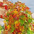 Glorious Autumn Leaves by Gill Billington