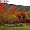 Glorious Fall Leaves by Laurel Talabere