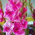 Glorious Gladiolus by Jo-Anne Gazo-McKim