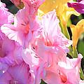 Glorious Summer Gladiolus by Carol Groenen