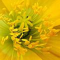 Glory Of Nature by Deb Halloran