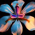 Glow by Stephen Denmark