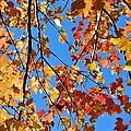 Glowing Autumn by Emma Motte
