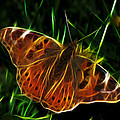 Glowing Butterfly by Shane Bechler