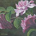 Glowing Camellias by Sheryn Johnson