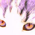 Glowing Cat Eyes by Anita Lewis