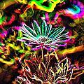 Glowing Flower by Jeff Swan
