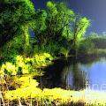 Glowing Pond On A Foggy Night by Ann Almquist