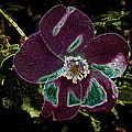 Glowing Wild Alaskan Rose 3 by Penny Lisowski
