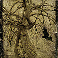 Gnarled And Twisted Tree With Crow by Gothicrow Images