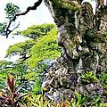 Gnarled Tree  by Phyllis Kaltenbach